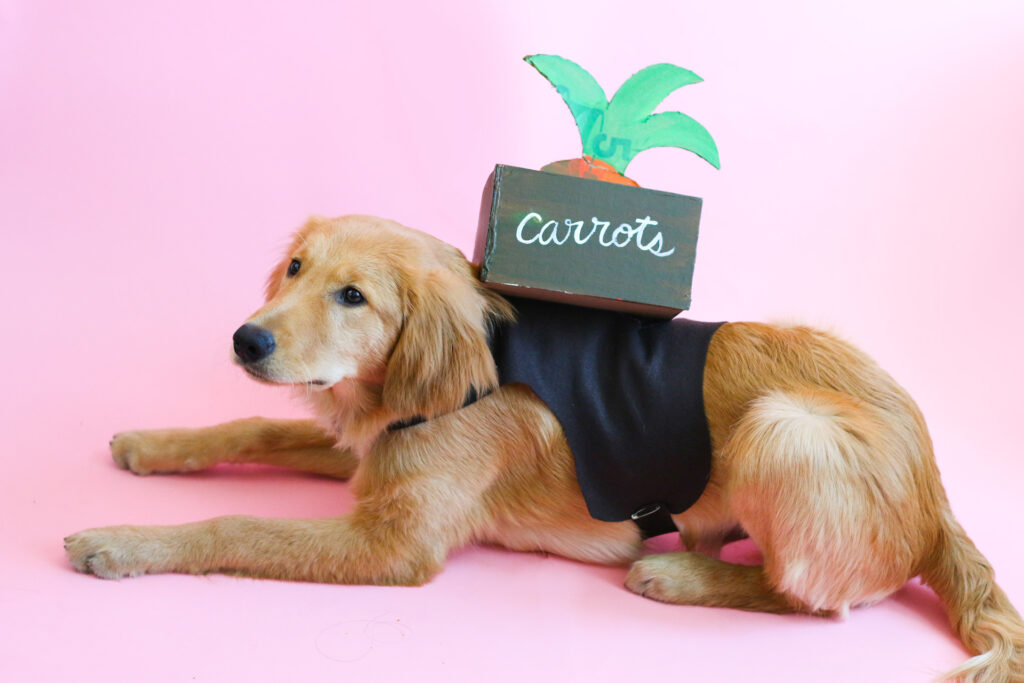 Carrot dog costume made from cardboard