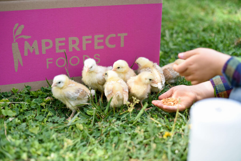 Creative ways to reuse a box for baby chickens
