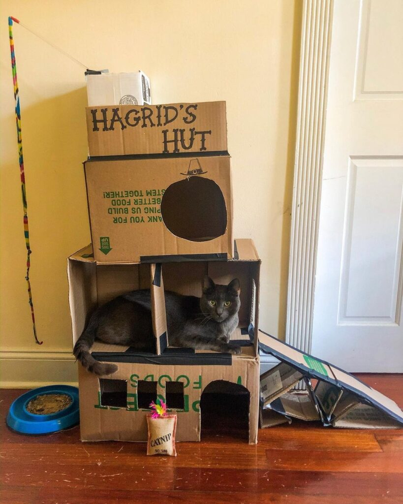 Creative ways to reuse a box for a cat fort