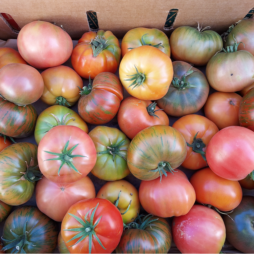 produce: quirky and imperfect tomatoes